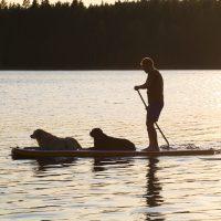 Finlandia con il cane: diario di viaggio