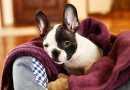 Il superamento dello stress nel cane