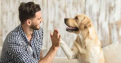 Dog sitter: una figura fondamentale, non si può improvvisare.