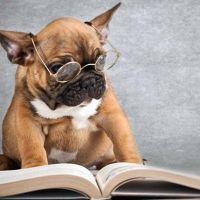I sette libri cinofili più significativi, secondo me.