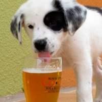 Cani e alcolici: cosa fare se dovesse succedere?