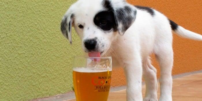cani e alcool