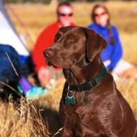 In campeggio con il cane, organizziamoci bene