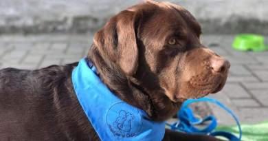 AMI.CO – Amici per la Coda: interventi assistiti con gli animali e cinofilia
