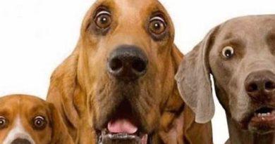 Il veterinario comportamentalista: questo sconosciuto!