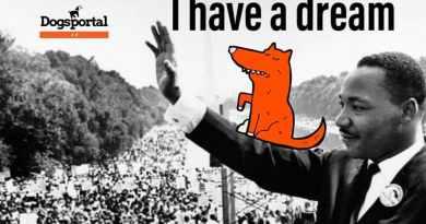 Il cane in Italia: sogni e proposte dei lettori di Dogsportal.it