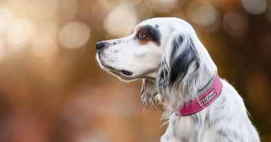 La bacheca di Zora: storie di  cani e adozioni  a lieto fine