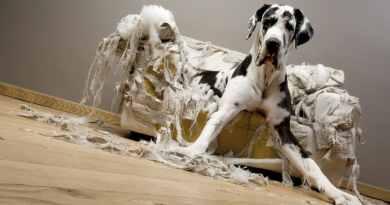 Ansia da separazione nel cane: importante riconoscerla