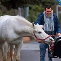 Jenny, il cavallo che passeggia a Francoforte. Da solo!