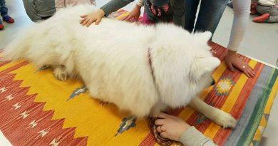 Accarezzare il cane durante un progetto di Pet Therapy