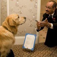 Il mio albergo è Dog friendly MA...