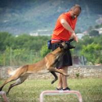 Il cane e il lavoro sul premio: l'essenza in tre ragioni