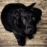 4 Regole per ottenere l'ingaggio del cane
