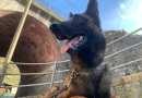Il cane da detection