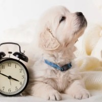 Come si calcola l'età del cane secondo la scienza.