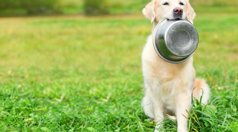 Consigli sull'alimentazione del cane