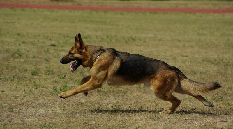 oltatto del cane e la pista