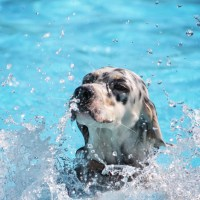 Piscine per cani al coperto: in acqua anche in inverno!