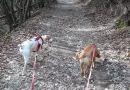 Il Decanerone: prima novella, la campagna e i cani.