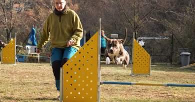 Sport cinofili: faccio agility con il mio Amstaff e mi diverto!