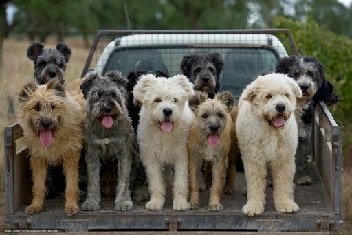 Le razze canine del Portogallo