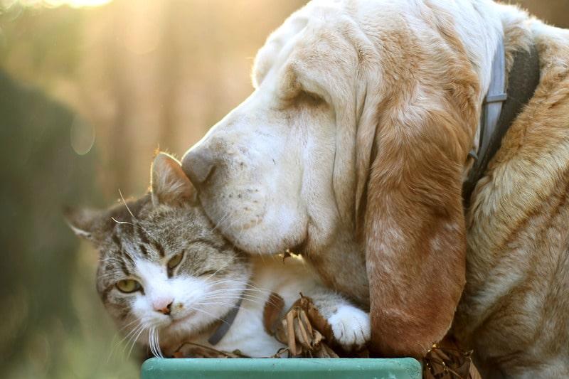 cani e gatti aiuto emotivo contro il coronavirus