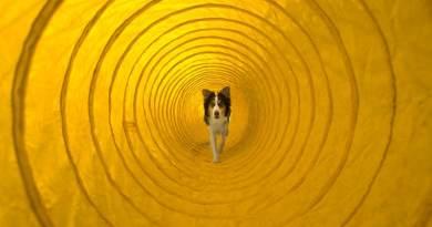 Cinofili: non siamo ancora fuori dal tunnel