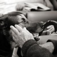 Lavorare in Pet Therapy