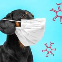 Covid-19 e animali: basta catene contro i virologi. Cosa dicono i veterinari?