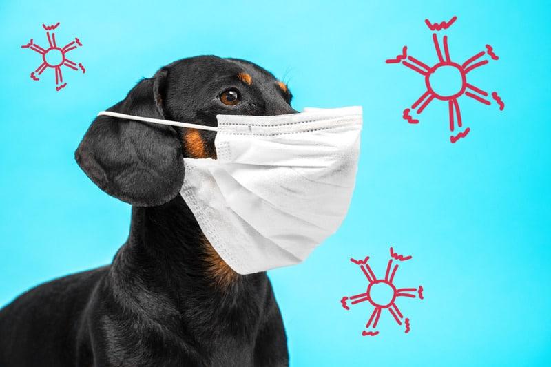 La Pet Therapy come potrà ripartire?
