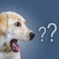 Parliamo di marketing e  comunicazione cinofila per le ASD?