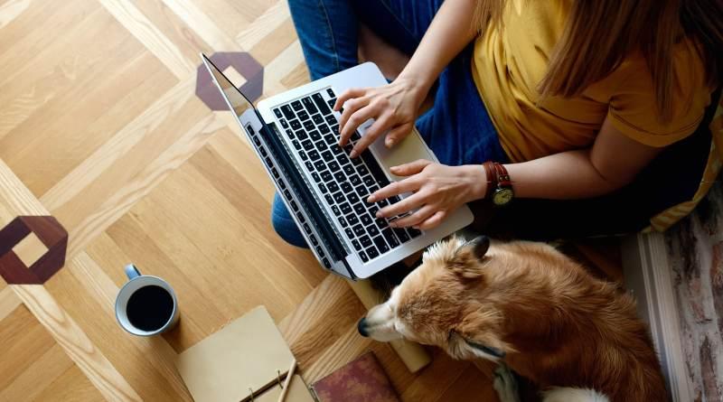 Rose canine: prima piattaforma professionale italiana dedicata all'animal training.