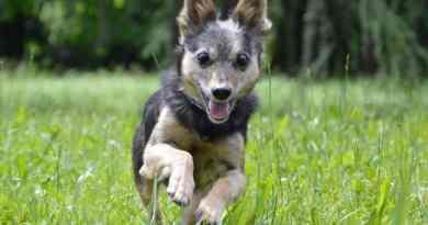 La storia di Mister! 5 kg e mezzo, leismaniotico, ipovedente ma un super cane!