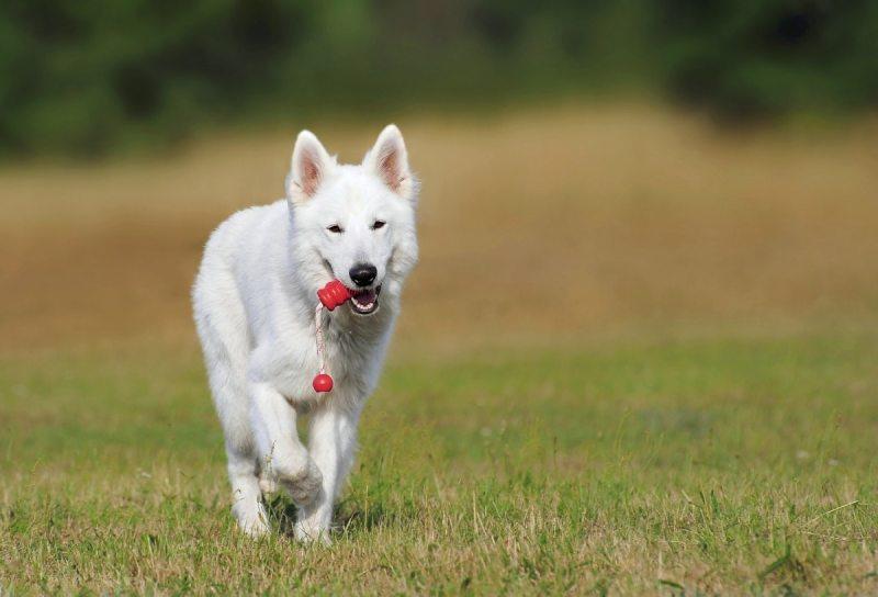 Educazione del cucciolo a Carmagnola