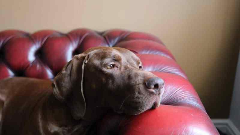Covid19: lockdown e cani