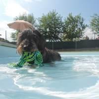 Vauda Beach: sport acquatici con il cane a due passi da Torino