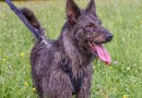 Rifugio Animali Biella: 40 anni di adozioni sul territorio