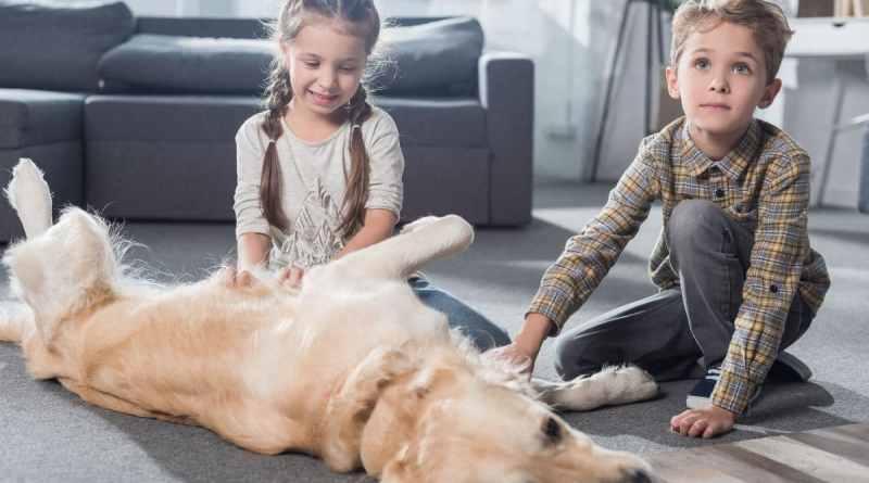 Intervista a Lara Dalloli: ideatrice della figura Dog&Family Coach
