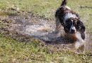Quando il tuo allenamento di canicross diventa una mud race
