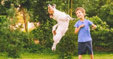 Emozioni nella formazione del cane: fondamentale riconoscerle.