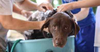Lavaggio del cane, cura del pelo e protezione dai parassiti