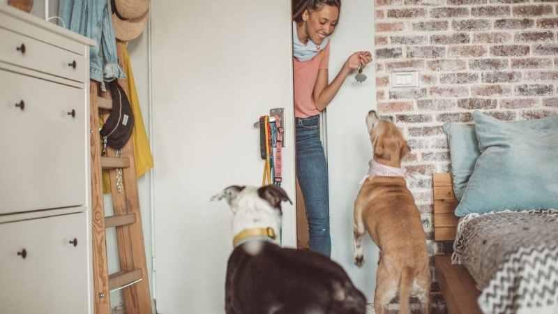 Professionisti degli animali: il dog sitter