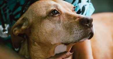 Poliradicoloneurite nel cane: malattia che si può gestire