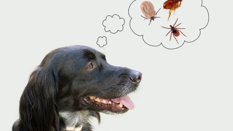 Olio di neem per i cani