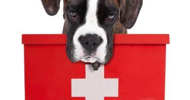 Sarà possibile curare gli animali con farmaci umani. Firmato il decreto!