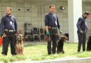 Contract working dogs: i cani da lavoro abbandonati in Afghanistan
