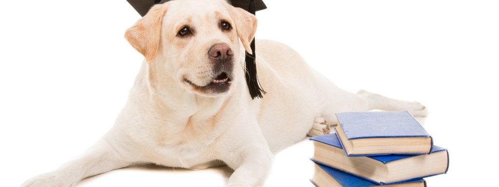 Book Gifts for Dog Lovers  Or Treat Yourself  | Dog Training Fresno