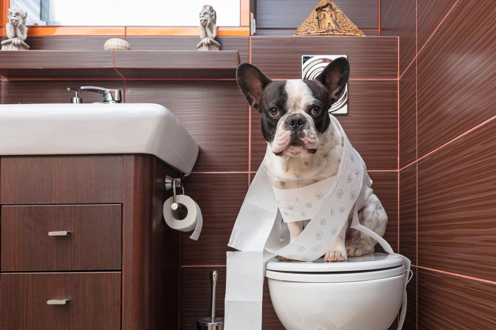 Adult potty training