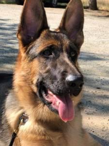Dogspring Training   Dog Training Fresno Board and Train