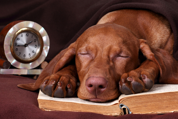 Dog asleep on a book next to a clock.